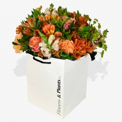 Snapdragon - same day or named day delivery - Rushes Florist