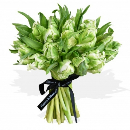 Parrot Tulips - same day or named day delivery - Rushes Florist
