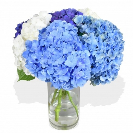 Happy Hydrangea - same day or named day delivery - Rushes Florist