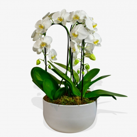 CASCADING ORCHIDS - same day or named day delivery - Rushes Florist