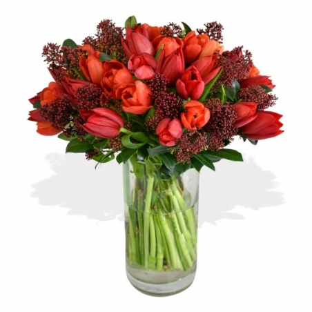 Tulips and Skimmia - same day or named day delivery - Rushes Florist