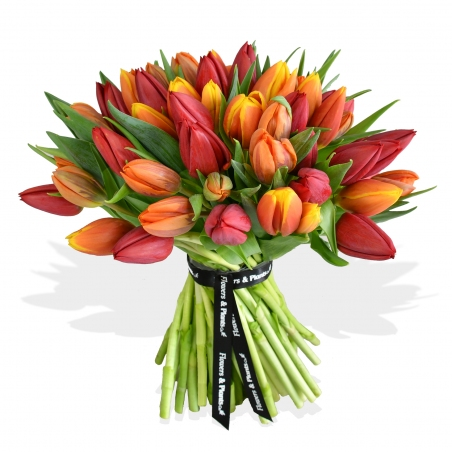 Mixed Tulips Bouquet - same day or named day delivery - Rushes Florist