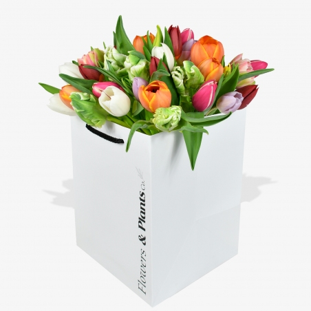 Tulip Temptation - same day or named day delivery - Rushes Florist
